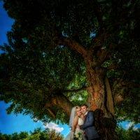 Wedding :: Вадим Сухотский