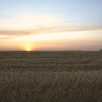 Рассвет над полем :: Albertik Baxton