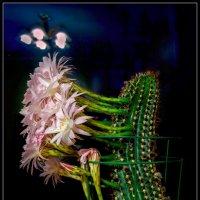 Цветы кактуса.1 :: Jossif Braschinsky