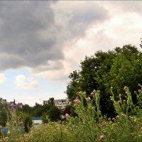 Дикая природа в черте города :: Нина Корешкова