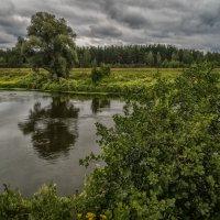 Дерево на берегу :: Андрей Дворников