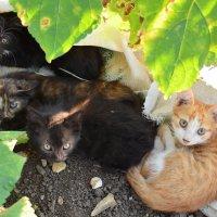 Брошенные в поле котята. :: Береславская Елена