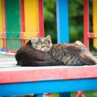 """""""Нет у нас подушки, нет и одеяла, жмемся мы друг к дружке, чтоб теплее стало!"""" :: Лия Таракина"""