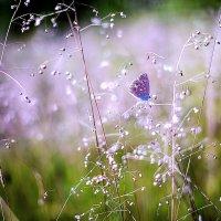 в траве.. :: Лилия .