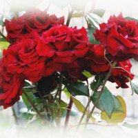 Июнь,розы... :: Тамара (st.tamara)