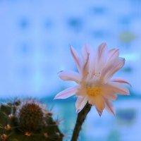 Цветок :: Андрей Самуйлов