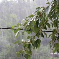 Дождь . :: Lobo Lobo