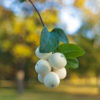 Плоды осени :: Виталий