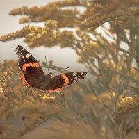 Полёт бабочки :: Ира Петрова