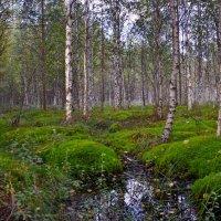 в лесу... :: Елена Третьякова