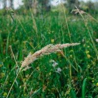 Трава- мурава :: Света Кондрашова