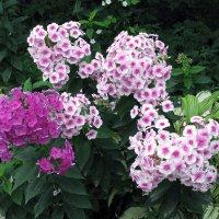 цветы :: Александр Корнелюк