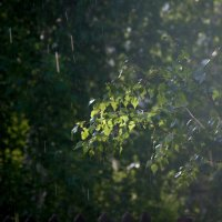 Летний дождик :: Катерина Дмитриева