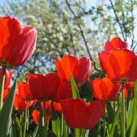 Весна :: Gal` ka