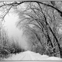 Зимняя дорога :: Михаил Цегалко