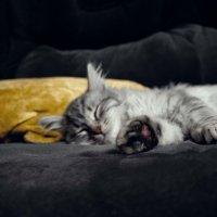 Сладкий сон :: Мария Святчева