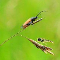 Жук  и  муха :: Геннадий С.