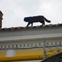Тише! Тише! Кот на крыше... :: Irina Дубовицкая