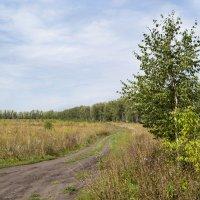 Во поле береза стояла :: Olga Golub