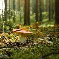 Гриб в лесу :: Дмитрий Кузнецов