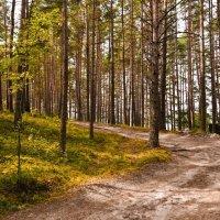 Дорога в лесу :: Дмитрий Кузнецов
