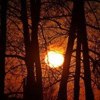 Запутавшийся  в  ветвях  закат. :: Vlad Borschev
