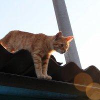 """""""Тише мыши-кот на крыше"""" :: Инна Малявина"""