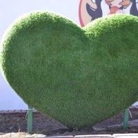 Сердце :: Марина Титкова