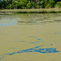 Тина закрывает воду :: Света Кондрашова