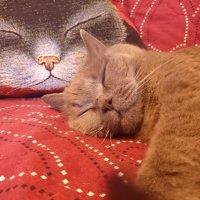 Теперь и поспать можно! :: Galina194701