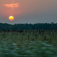 Садится солнце красно-золотое… :: Юлия Бабитко