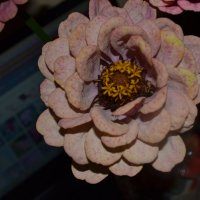 Цветы лета. :: zoja