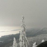 Январь в Финляндии :: Марина Домосилецкая