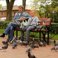 Кормление голубей :: Вера Моисеева