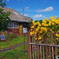 Полисадник. :: Ирина Нафаня