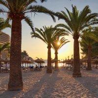 Пальмы, солнце и песок :: Юрий Кольцов