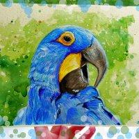 Синий попугай :: Анастасия Белякова