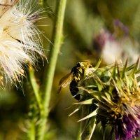 Wasp :: Rina .