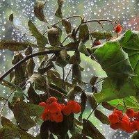 За окном ливень..... :: Павлова Татьяна Павлова