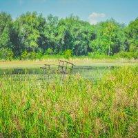Железка в воде :: Света Кондрашова