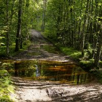 Лесная дорога, после дождя. :: Vladimir