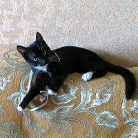 Кошка Мася :: татьяна петракова