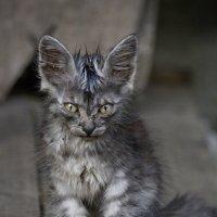 Котёнок. :: Никифорова Галина