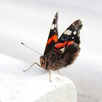 Бабочка :: Ксения Прикман