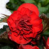 цветениецветение :: владимир строгонов