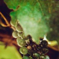 Кисть винограда :: Gulyara Rostovtseva