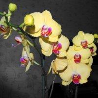 Портрет цветов :: svk