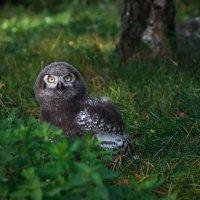 Совушка сова :: Juls Juls