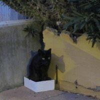 Котенок в коробке :: Герович Лилия