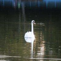 прогулка в парке :: Anastasiia S